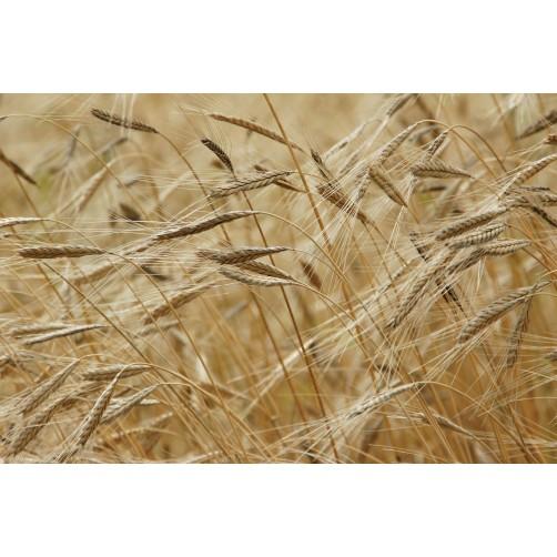 Energetische Harmonisierung von landwirtschaftlichen Flächen - Analyse und Beratung
